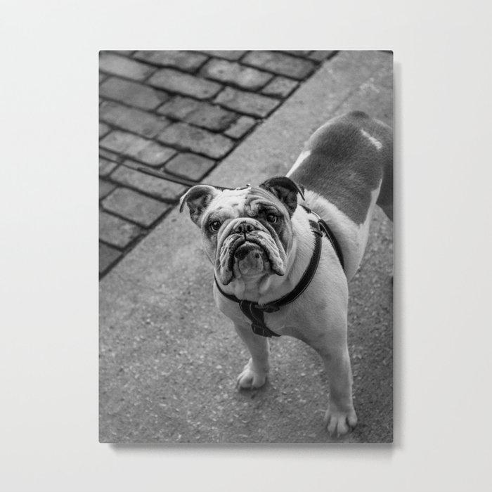 French Bulldog - Black & White Metal Print