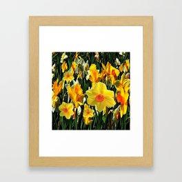 GOLDEN ORANGE YELLOW SPRING DAFFODILS Framed Art Print