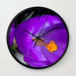 Deep purple and orange crocuses Wall Clock