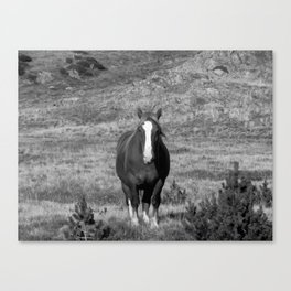 Wild Horse of Andorra Canvas Print