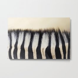 Zebra hair Metal Print