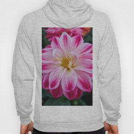 pink dahlia in the garden Hoody