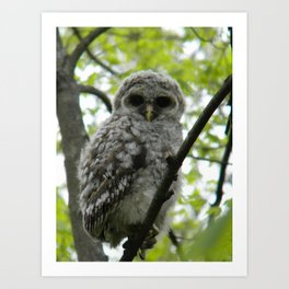 Bard Owl baby Art Print