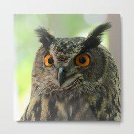Owl_20180204_by_JAMFoto Metal Print