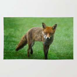 Wild Red Fox Rug