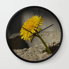 Dandelion That Grew From Concrete Wall Clock