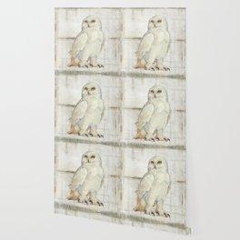 SnowOwl Wallpaper