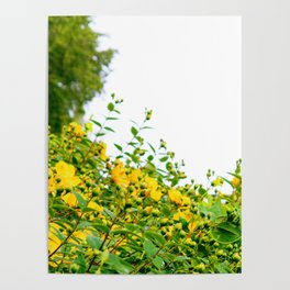 Happy Flowers Poster