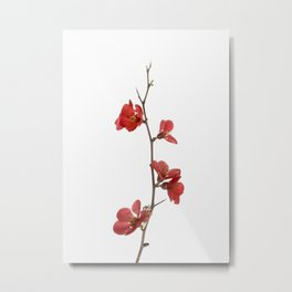 Branch with flowers Metal Print