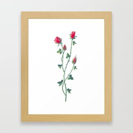 Rose branch Framed Art Print