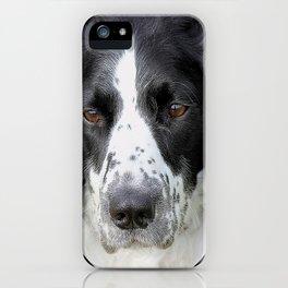 Border Collie iPhone Case