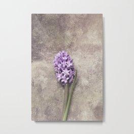 Light Purple Hyacinth Metal Print