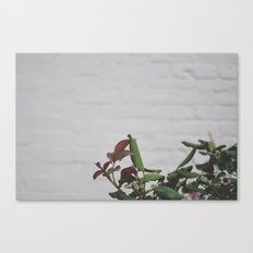 Rose Hips - No. 2 Canvas Print