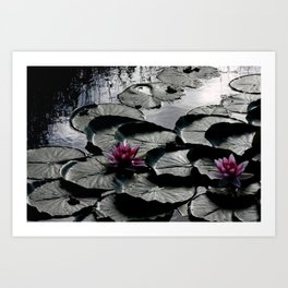 Water Lillies 2340 Art Print