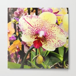 Exotic Tropical Yellow Orchid With Pink Magenta Spots Metal Print
