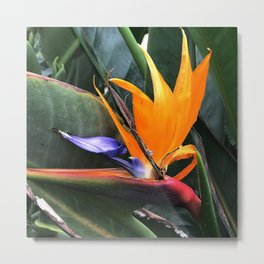 Bird Of Paradise Flower With Chic Leaves Metal Print