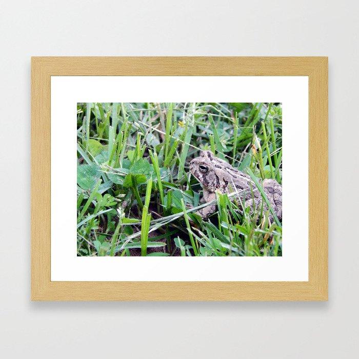 The Waiting Frog Framed Art Print