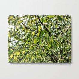 Pea Pod Tree Metal Print