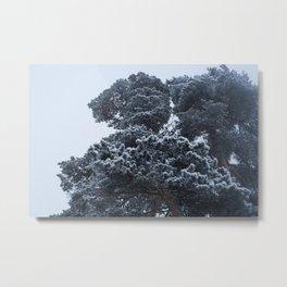 Pine Metal Print