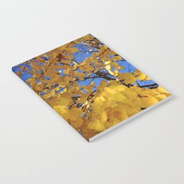 Fall Colors Notebook