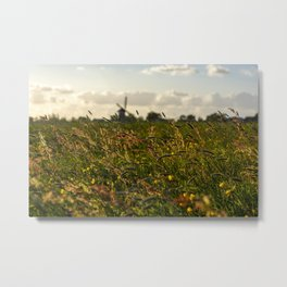 Dutch summers Metal Print