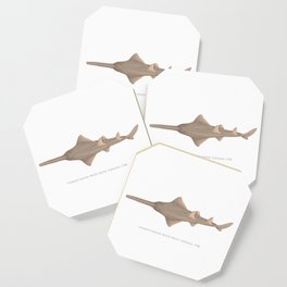 Sawfish Coaster