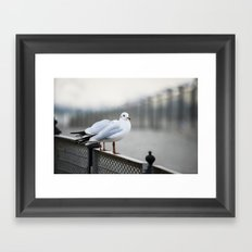 Sitting on The Fence Framed Art Print