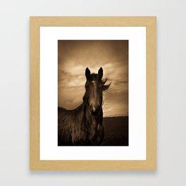 English horse in sepia tones Framed Art Print