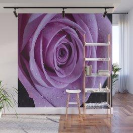 Purple Rose-3 Wall Mural
