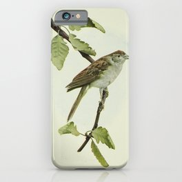 Vintage Print - Birds and Nature (1901) - Chipping Sparrow iPhone Case