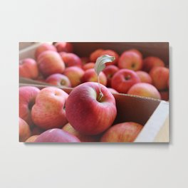 Harvest Apples Metal Print