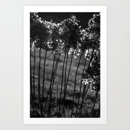 Lichtblick Art Print