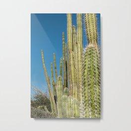 Travel Photography 'Cactus Desert' photo art made in Caribbean Aruba. Art print. Metal Print