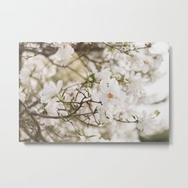 The Magnolia Tree Metal Print