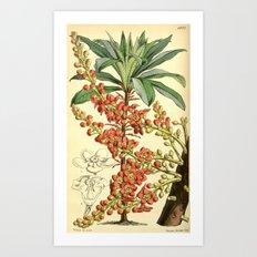 Botanical Illustration No.4922 Art Print