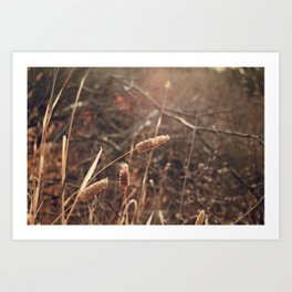 Golden Hour in the fields of Ojai California Art Print