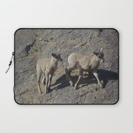 Big horn sheep young in Jasper National Park Laptop Sleeve
