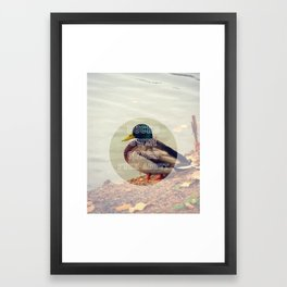Ducks Framed Art Print