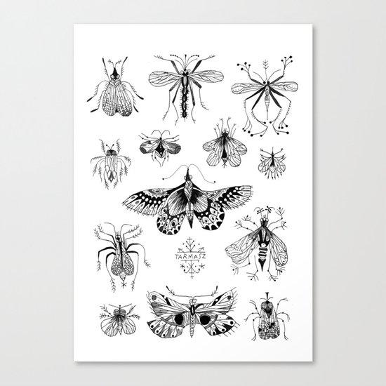 INSECTE Canvas Print