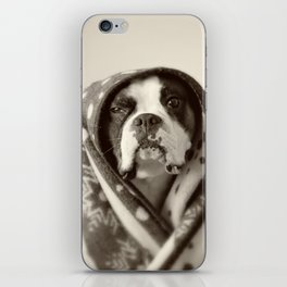 Obi Wan (Buck the world's most lovable boxer dog) iPhone Skin