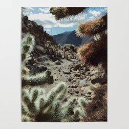 Cholla Frame Poster