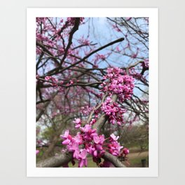 Spring Bloom Art Print