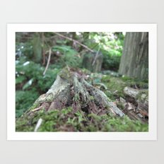 Log in the Woods Art Print