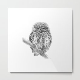 The Eurasian Pygmy Owl Metal Print