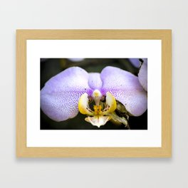 Macrophotography: Pink Orchid Framed Art Print