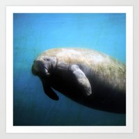 manatee Art Prints featuring Manatee by ZenzPhotography