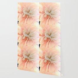 Dahlia, Soft Pink Glow Wallpaper