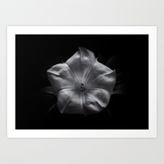 Backyard Flowers In Black And White 24 Art Print