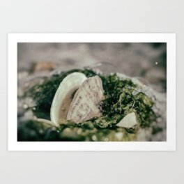 Seaweed and Seashells Coastal Nature Photography Art Print