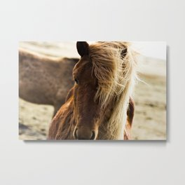 A Pony in Iceland Metal Print